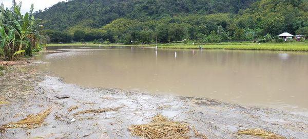 Curah Hujan Tinggi  20 Hektar Lahan Pertanian Terendam Banjir